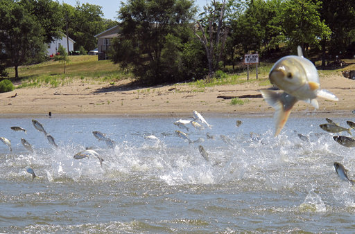 States join battle to protect Great Lakes from Asian carp