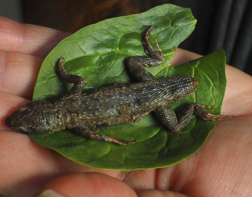 This week in odd news:  Lettuce lizard; Dog and pony show