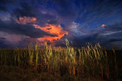 FILE - In this Oct. 20, 2019 photo, a clearing late-day storm adds drama in the sky over a sawgrass prairie in Everglades National Park in Florida.  The Biden administration is outlining a plan to sharply increase conservation of public lands and waters over the next decade. A report to be issued Thursday recommends a series of steps to achieve a nationwide goal to conserve 30% of U.S. lands and waters by 2030. (AP Photo/Robert F. Bukaty, File)