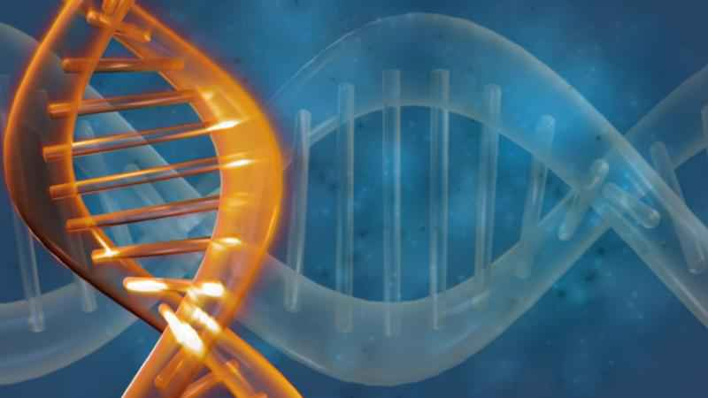 Scientists Confirm Experiment Editing Genes of Human Embryos