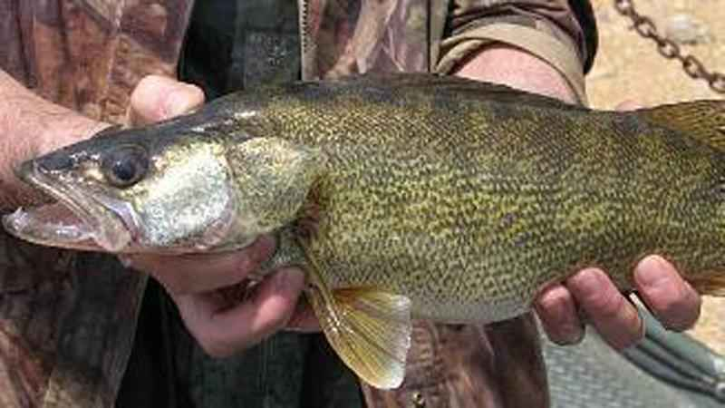 Mille Lacs Lake Walleye Closure Extended