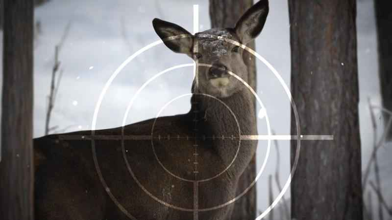 Female Hunters Increase in MN as Overall Numbers Drop