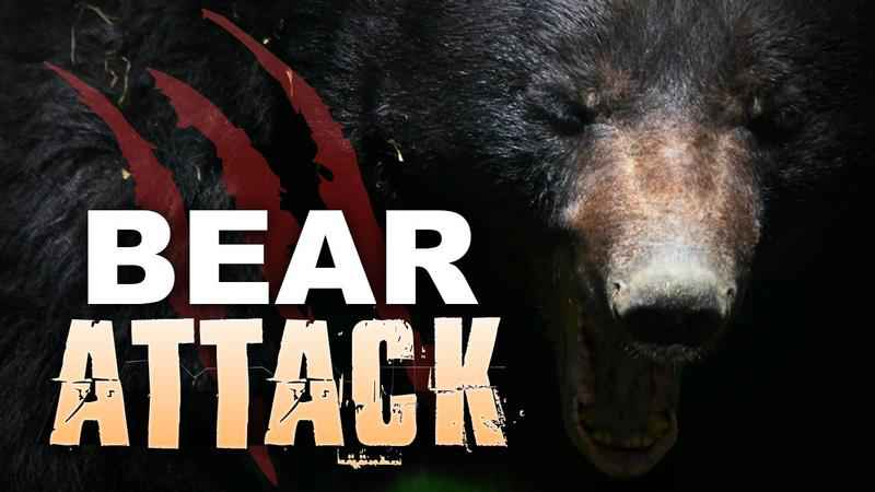 Black bear who attacked multiple men has been killed.
