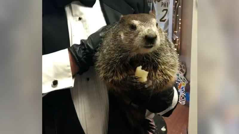 Punxsutawney Phil Foresees No Early End to Winter