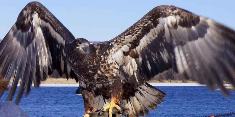 New Ambassador at the National Eagle Center