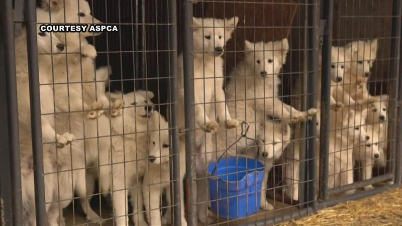 UPDATE: 'Appalling:' Nearly 170 Dogs Seized From Worth County Kennel