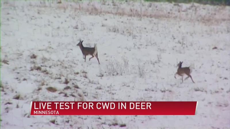 Lawmakers, U of M Researchers Hope Live Tests Will Slow Spread of CWD