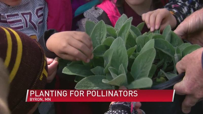 Stewartville Kindergartners Learn the A-Bee-C's of Pollinators