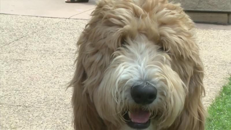 Hundreds of Dogs Descend into Downtown Rochester