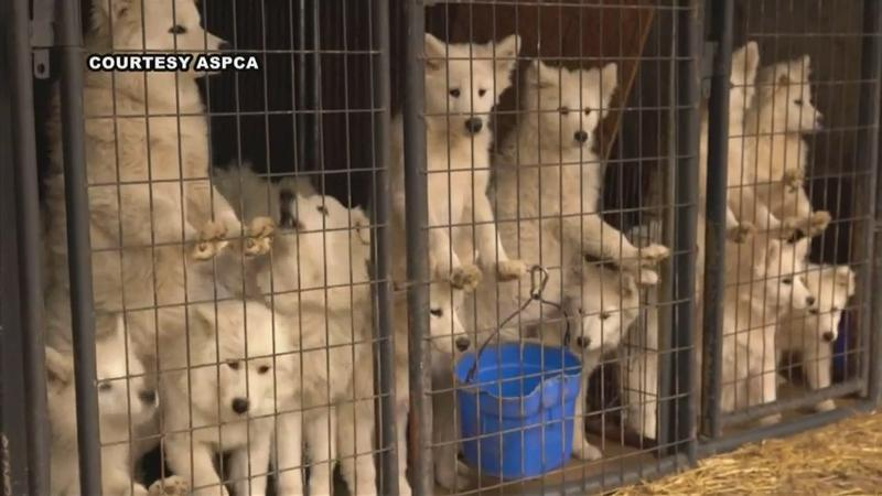 Iowa kennel owner sentenced for animal neglect