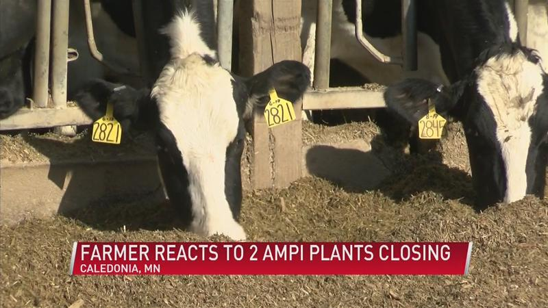 Dairy farmers react to two AMPI plants closing