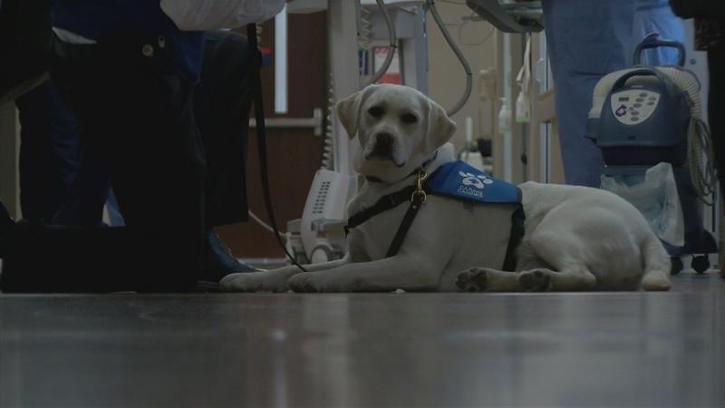 Therapy Dogs help patients at Mayo Clinic
