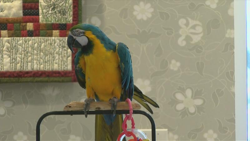 Rochester seniors get up close with tropical birds