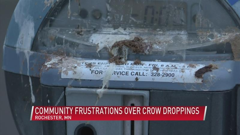 Community frustrations over crow dropping