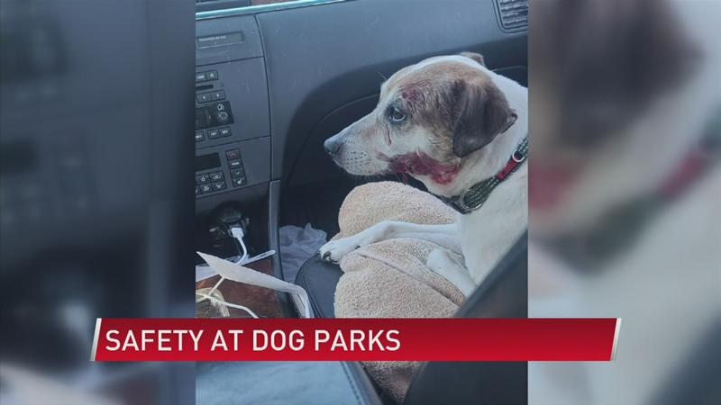 'I'm glad that he's still alive': Owner reacts after dog attacked
