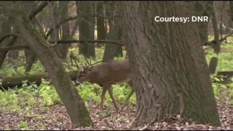 Third Deer with Chronic Wasting Disease Found in ...