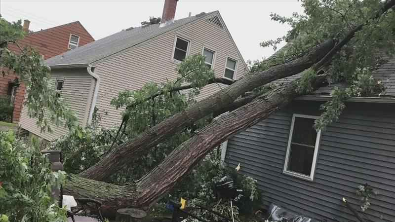 Downed Tree Brings Word of Advice from Tree Removal Service