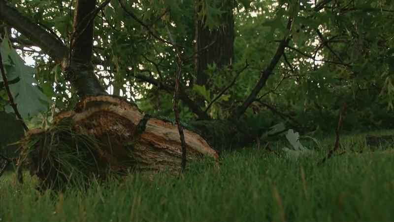 Wednesday Night Storm Coverage: Witness Describes Tornado, Damage in Chester Woods Park