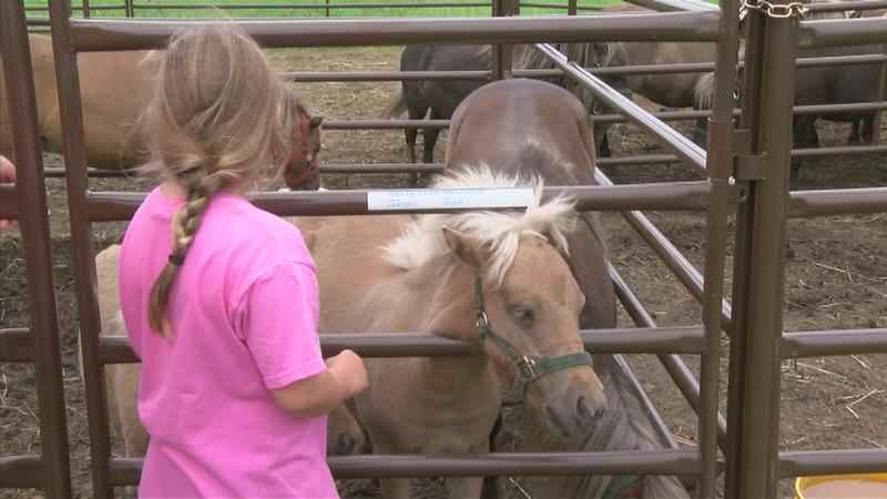 Local Horse Farm Helping Families