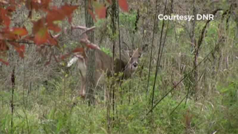 Rushford Company Hoping to Ease CWD Testing