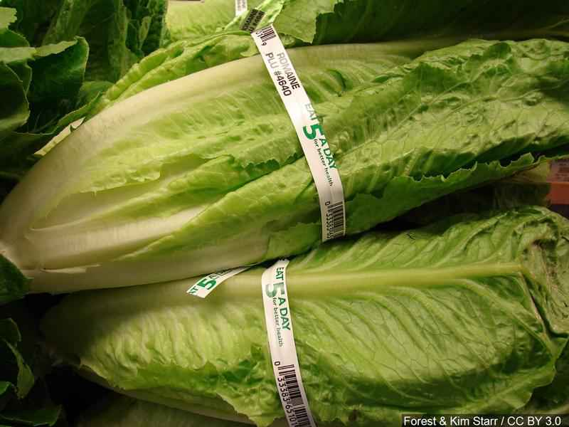 U.S. Officials Warn don't eat Romaine Lettuce
