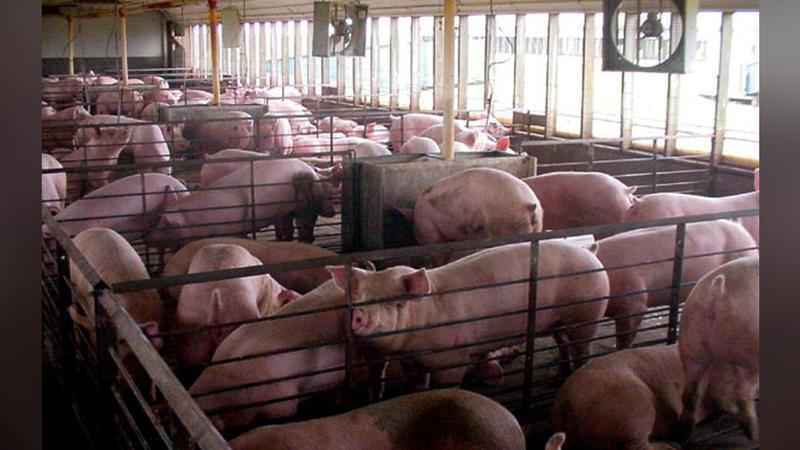 MPCA Denies Permit for Proposed Feedlot in Fillmore County