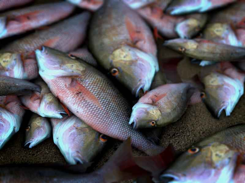 Iowa Officials: Manure Runoff Causes Fish Kill Near Peosta