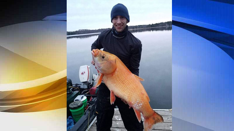 Minnesota Man Catches a Mystery Fish; Rare for its Color, Remarkable for its Age