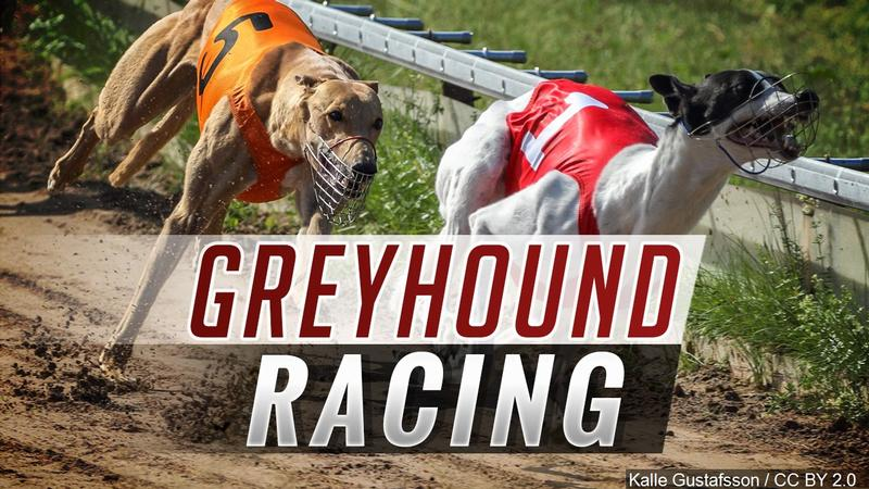 Iowa Greyhound Park bets rise again, but future still dicey