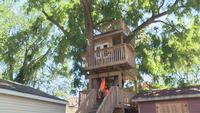 Local Girl's Tree House is in Trouble