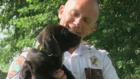 Explosive-Detection Puppy Joins K9 Unit