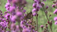 Monarch Video Goes Viral on Social Media, Showing Impact of Native Plants