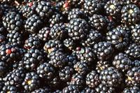Blackberries linked to hepatitis A outbreak in several states including Minnesota