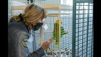 Animal Rescue League of Iowa saves exotic birds living in 'deplorable' conditions