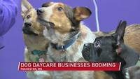 Local doggy daycare business booming